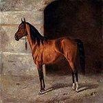 Karabakh-horse