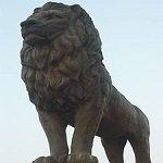Panthera leo2